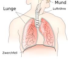 Anatomie der Atmung